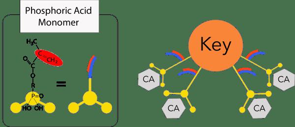 3D monomer #2